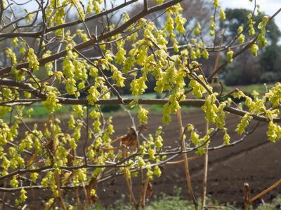 春爛漫の所沢市南永井付近の風景