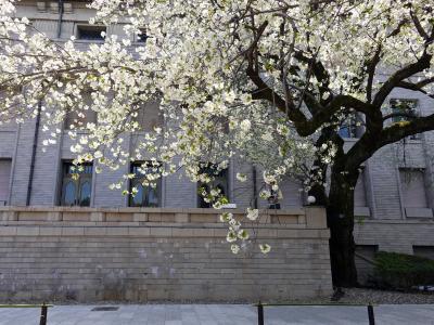 春の陽気に誘われて(上野の博物館へお花見に)