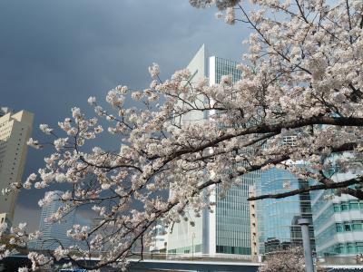 2021春・横浜お花見散歩
