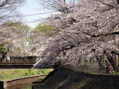 東京散歩 善福寺川を善福寺から和田掘公園を経て中野富士見町駅まで歩きました。
