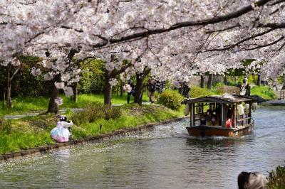 20210326-2 京都 伏見みなと公園の桜が見頃でしたなぁ