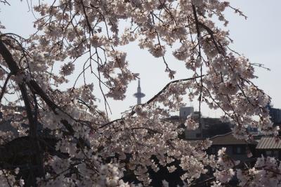 20210323 京都 鴨川散歩、九条辺りから五条の手前くらい