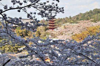 2021 広島で思い出作り! その①お世話になった厳島神社へ