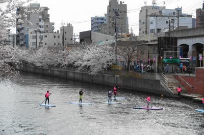 今年の大岡川の桜