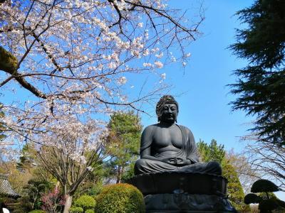 都内で桜と寺社めぐり(板橋~杉並~六本木)