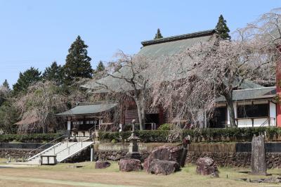 芝山町散策・・桜満開の芝山仁王尊と芝山公園を訪ねます。