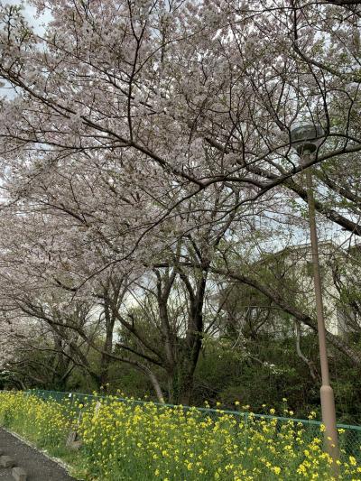 思いがけず桜の名所⁉︎
