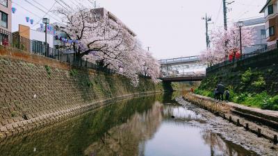 大岡川の桜2021