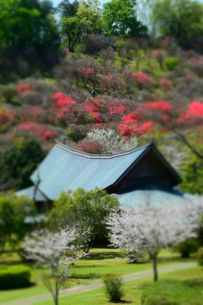 美しいにも程がある・・・。西都原の桜と菜の花のシンフォニー♪