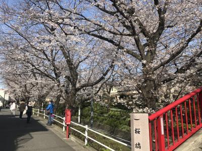 2021年3月、桜いろいろ