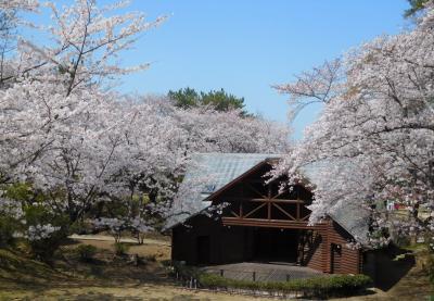 2021年3月 山口県山陽小野田市 若山公園の桜は満開でした。
