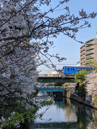 お手頃お花見、京急沿線、戸部駅、ちょっと皇居の桜も…