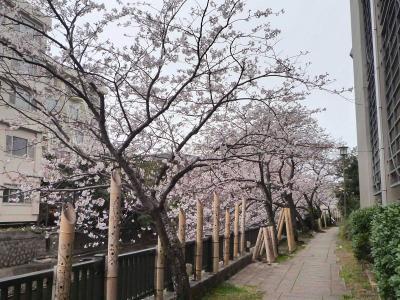 2021.3 伊東温泉で1泊、城ヶ崎海岸・伊豆高原で桜を見て来た2日間(前編・伊東温泉)