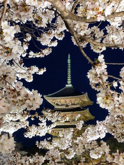 東寺の桜ライトアップが異次元の美しさだった件