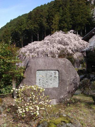 枝垂桜巡り !  東吉野村・宝蔵寺