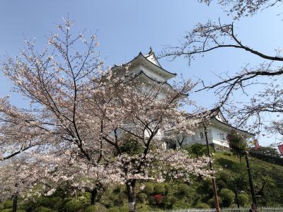 小田原城のお花見