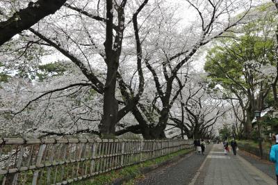 桜and名古屋めしhunt②と、ちょこっと名古屋観光