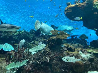 ひとり旅ワーケーション2日目 at 鹿児島 仕事の合間に水族館