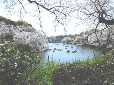 北の丸公園から千鳥ヶ淵の桜