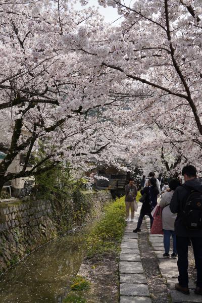 20210329-3 京都 哲学の道、お花見散歩