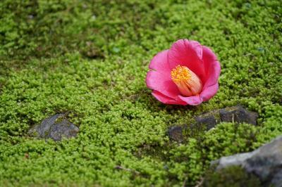 20210329-4 京都 哲学の道のお花見散歩の途中、法然院の緑で一休み