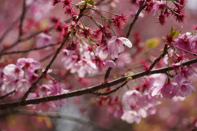 20210329-5 京都 哲学の道お花見散歩の終点、熊野若王子神社にお参りを
