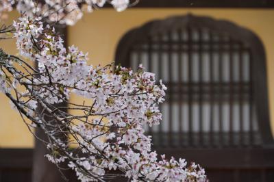 20210329-6 京都 南禅寺も桜が綺麗なところやねんね
