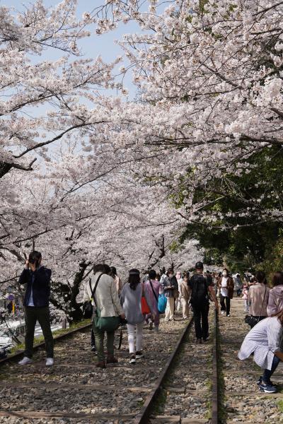 20210329-7 京都 やっぱりインクラインのお花見は混み合いますのね
