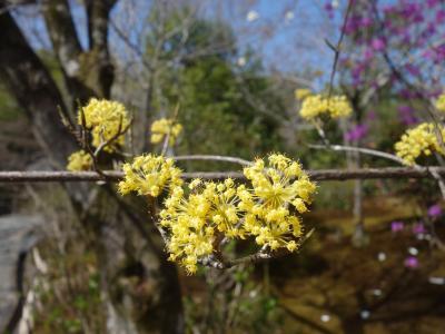 天龍寺の庭園は花盛り。たくさんの花が艶を競っています。