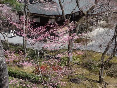 天龍寺の庭園を見下す。上から見る桜も格別です。
