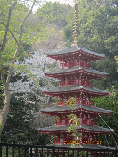 桜を求めて武蔵台公園、黒鐘公園、武蔵国分寺跡、お鷹の道、真姿の池湧水群をウロウロ
