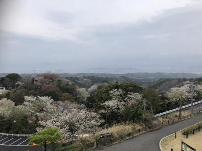 2021年03月 静岡タウン旅行 日本平