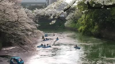 散り始めの桜を見に東京散歩