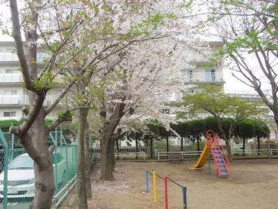 西鶴ケ岡公園の桜