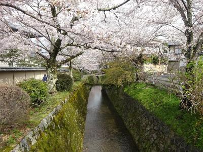 桜の京都 2021.3.29