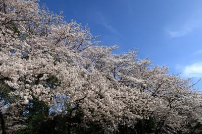 城山公園(神奈川県綾瀬市)へ・・・