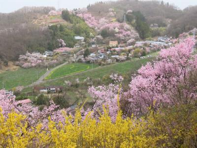 晴れおじさん「花見山に花見」に行く