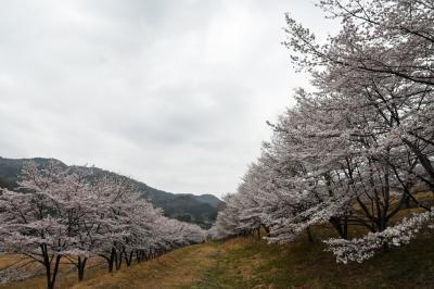 東秩父でお花を愛でて&歩いて