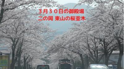 3月30日の御殿場二の岡・東山の桜並木