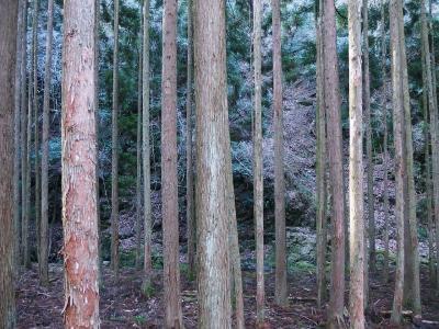 大原野森林公園に行ってきた。