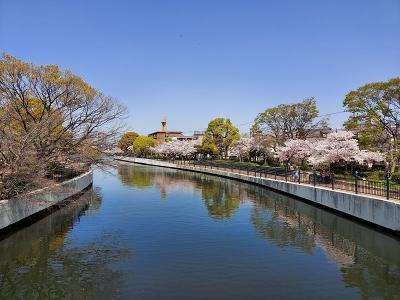 ディスカバリーご近所。桜とピロシキ求めて、尼崎市内をチャリで爆走!