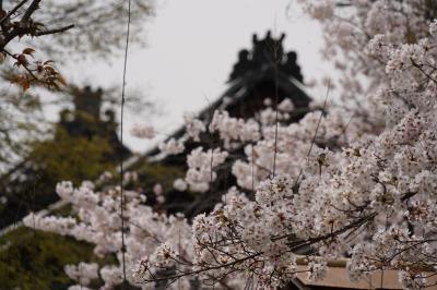 20210330-1 京都 醍醐寺 其の一は、三宝院の庭園