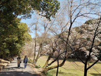 花見ウォーキング…奥殿陣屋~村積山~奥山田のしだれ桜