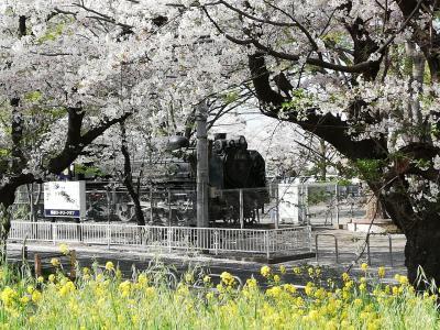 熊谷の桜とマンホールカード収集