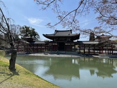 春の京都~宇治・二条城
