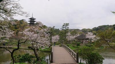 三溪園を散策。桜がキレイ。