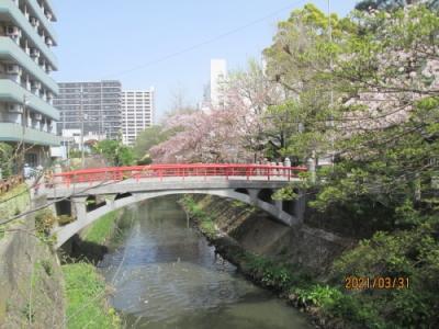 松戸市の松戸・松戸神社・さくら