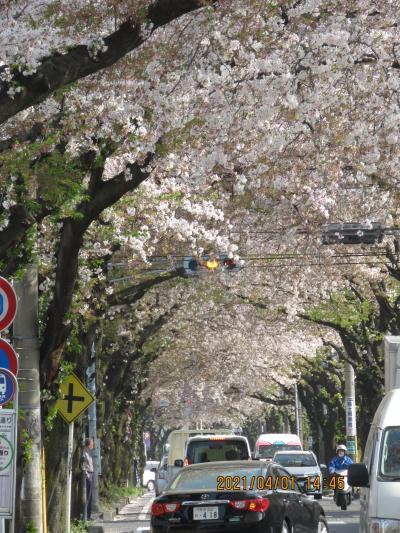 その後の桜のトンネル
