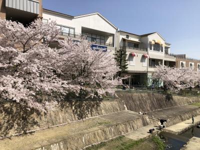 島熊山「GRAVES」のランチから箕面Q'zモールの桜