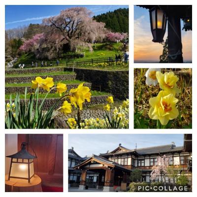 ~桜の花でいっぱいの奈良へ~ 前編 <又兵衛桜・二月堂夕景と奈良ホテル>